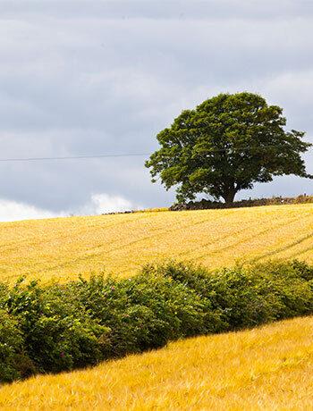 Aberdeenshire 350x460